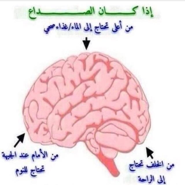 آآه رأســي عالم حواء