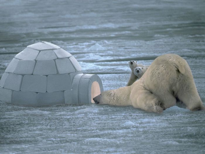 صورللدب القطبي والدب الباندا والكولااااا سبحان الخالق عالم حواء