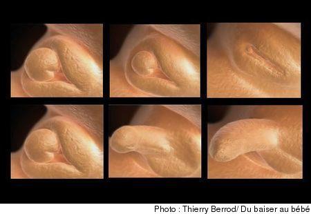 متى يبان جنس الجنين