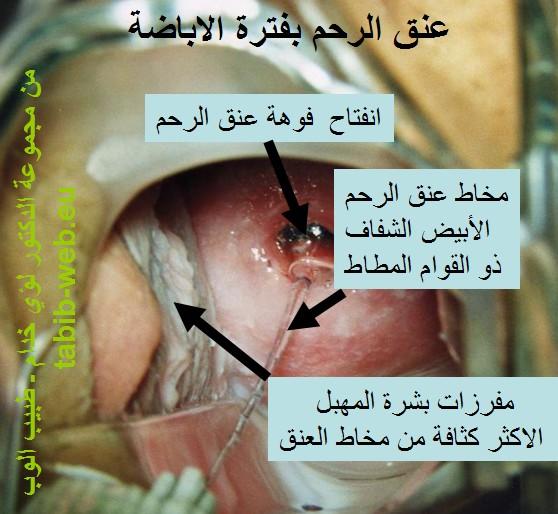 ملف كاامل شامل عن التبويض الحمل الولادة امراض النساء بالصور عالم حواء